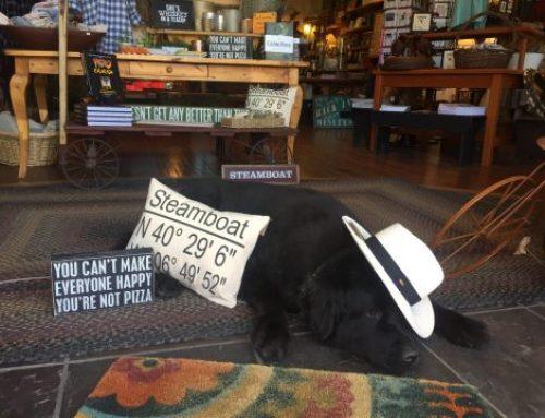 Remember Me Shop Dog on Duty
