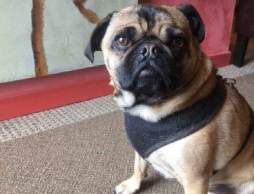 Steamboat Art Company Shop Dog on Duty